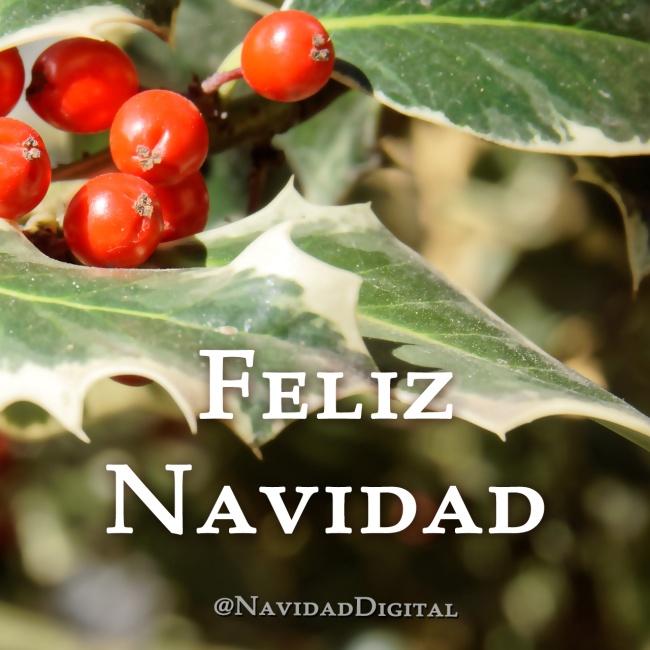 christmas-navidad2014-acebo