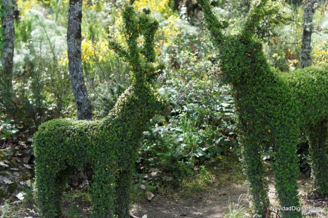 renos-bosque-encantado