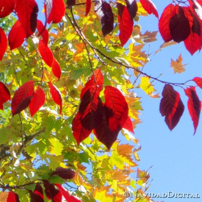 hojas-septiembre-feliz-24