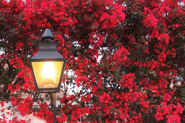 flores-cordoba-jiglesias-dp