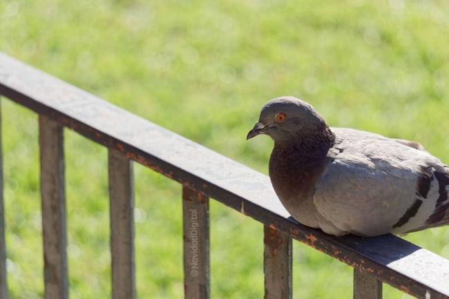 paloma-retiro-verano-madrid