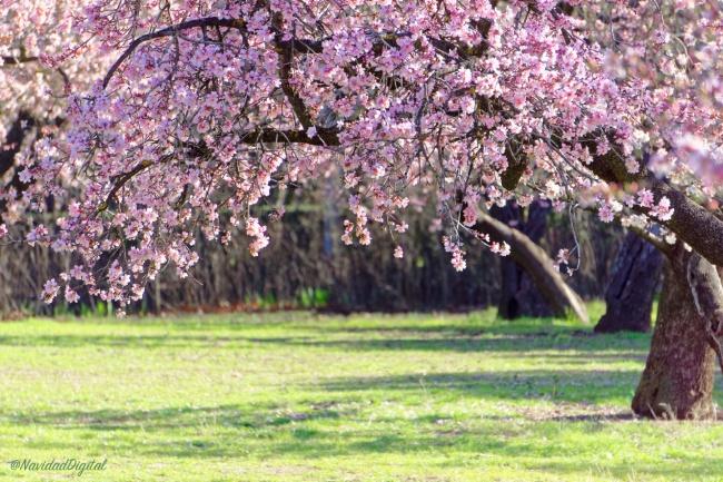 almendros-flor-quinta-molinos