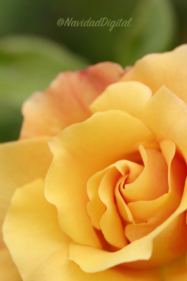 flor-naranja-logo-face