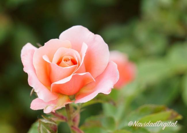 flor-retiro-madrid
