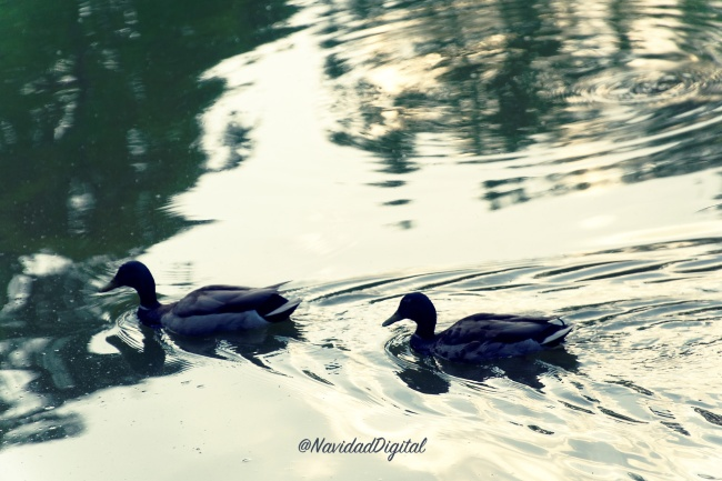patos-retiro-madrid.jpg